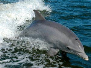 Visite Sesimbra COM Observação de Golfinhos